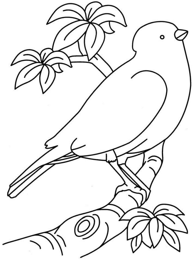 Printable Bird Coloring Pages Coloring Me