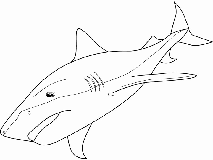 Printable Shark Coloring Pages Coloring Me Shark Colouring In Pages